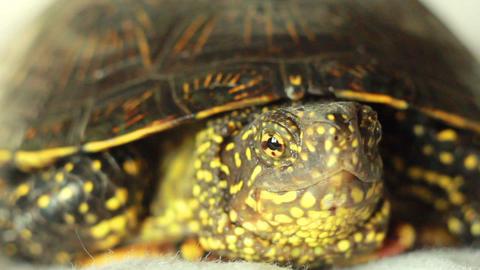 Turtle 2 Stock Video Footage