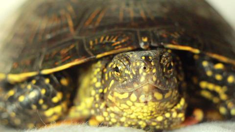 Turtle 2 Footage