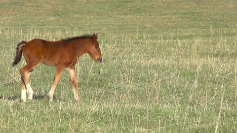 Foal HD Stock Video Footage