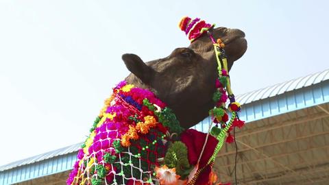 At the Pushkar camel fair Stock Video Footage