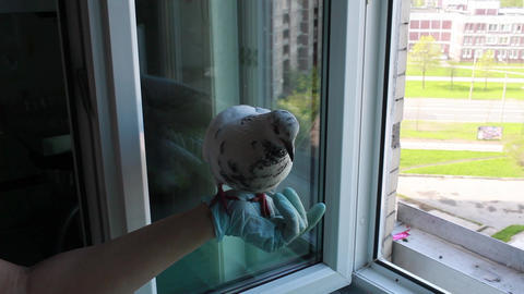 feeding of pigeon Stock Video Footage