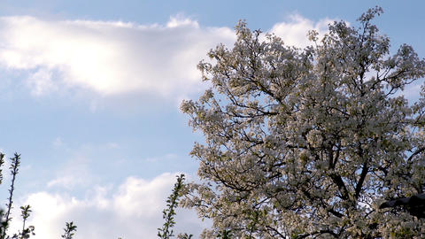 Spring Clouds HD Stock Video Footage