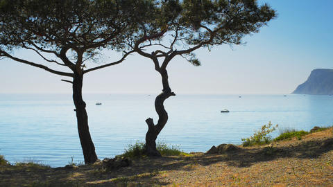 Beautiful seascape and Crimean pine on a backgroun Stock Video Footage