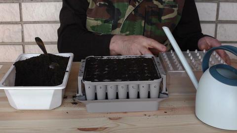 Preparing nursery box for onion seeding 2b Stock Video Footage