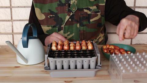 Planting onion bulbs in nursery box 4b Stock Video Footage