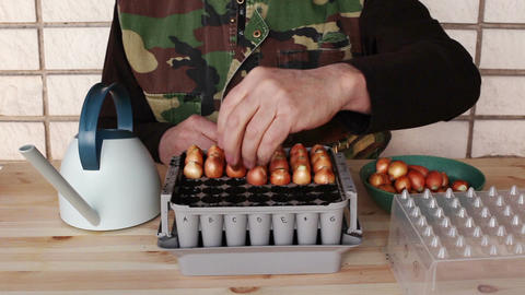 Planting onion bulbs in nursery box 4b Stock Video Footage