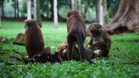 Monkey activity Footage
