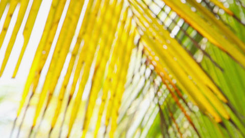 Palm leaves Stock Video Footage