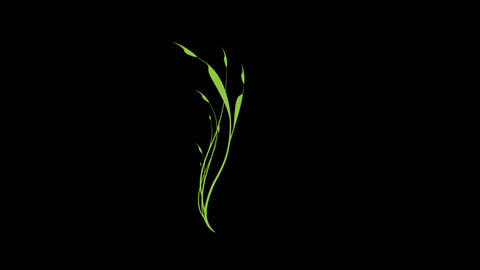 floral element 019 Stock Video Footage