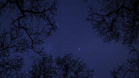 4k UHD night sky stars between trees time lapse star... Stock Video Footage