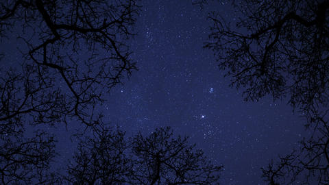 4k UHD night sky stars between trees time lapse star... Stock Video Footage
