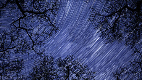 4k UHD night sky stars between trees time lapse star trail 10939 Footage