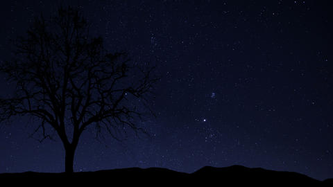 4k UHD night sky stars tree time lapse star trail Stock Video Footage