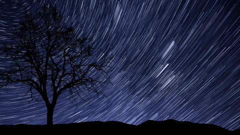 4k UHD night sky stars tree time lapse star trail  Footage