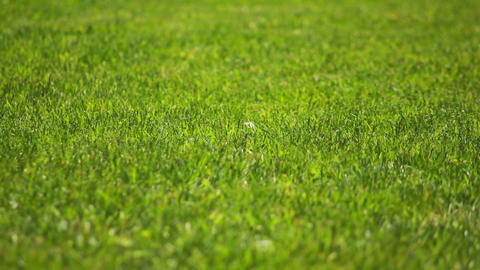 Grass 1 Stock Video Footage