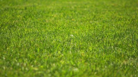 Grass 1 Stock Video Footage