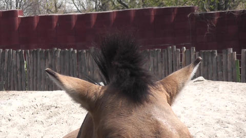 ears horse Stock Video Footage