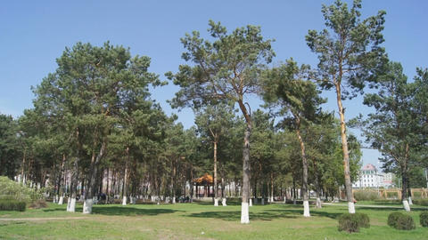 Heihe Park Longbin Pines 01 Footage
