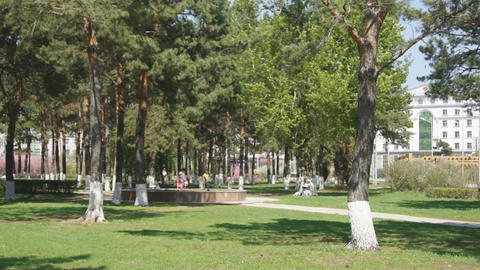 Heihe Park Longbin Pines (03) Stock Video Footage