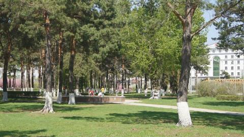 Heihe Park Longbin Pines (03) Footage