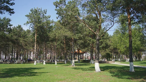 Heihe Park Longbin Pines 05 Stock Video Footage