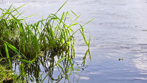 River grass Stock Video Footage