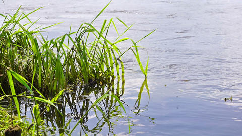 River Grass stock footage
