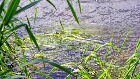 Grass in the river Stock Video Footage