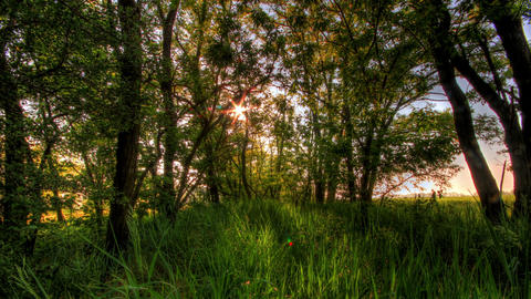 Time-lapse Of Nature Spring Forest Stock Video Footage