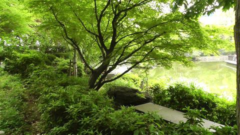 Park in Yokohama Japan 5 Footage