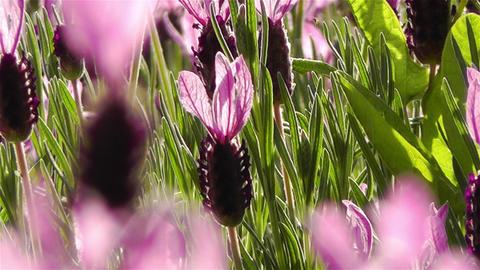 Summer Flowers 12 Stock Video Footage