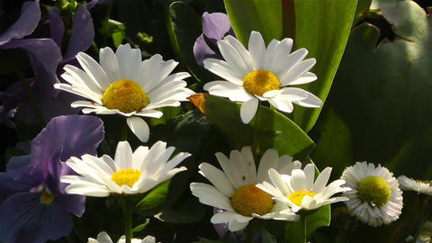 Summer Flowers 16 Footage
