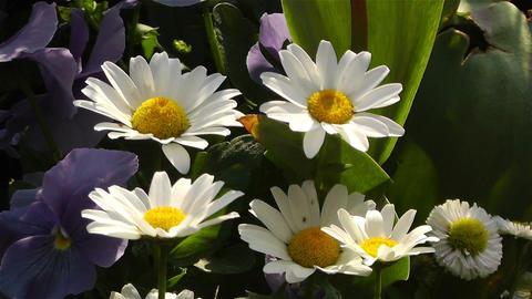 Summer Flowers 16 Stock Video Footage