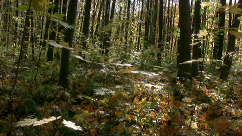 Autumn forest panorama Stock Video Footage