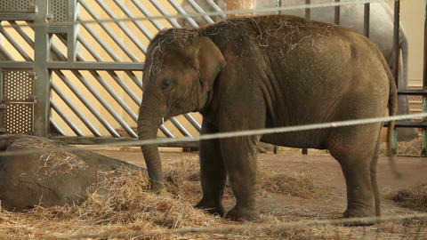 Small elephant, zoo Stock Video Footage
