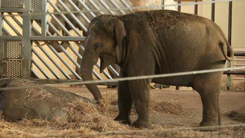 Small elephant, zoo Stock Video Footage
