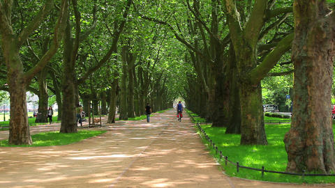 Green trees in park at summer Footage