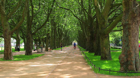 Green trees in park at summer Stock Video Footage