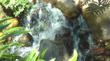 Closeup of small pure fresh creek in forest Stock Video Footage
