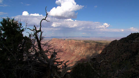 Zoom out grand canyon to shadow of death trees Footage