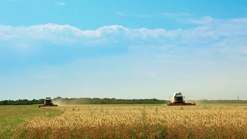 Harvesters gather the wheat Stock Video Footage