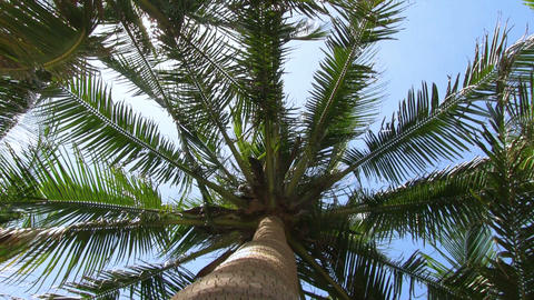 Palm tree Footage