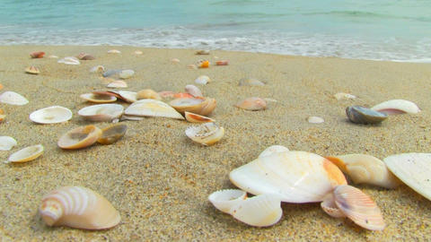 Shells on the beach Stock Video Footage