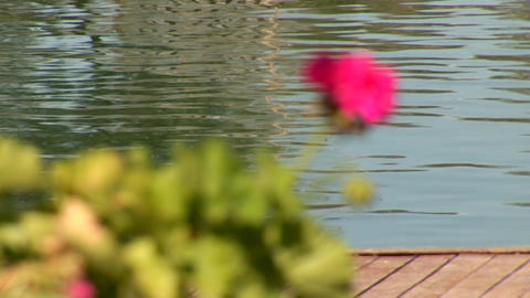 flower in water Stock Video Footage