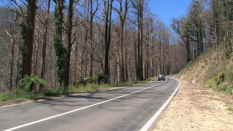 car driving between burned trees Footage