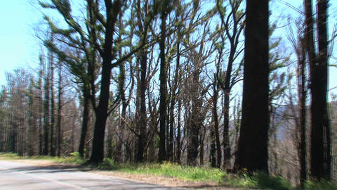 Zoom out from burned tree at Dandenong Ranges Footage