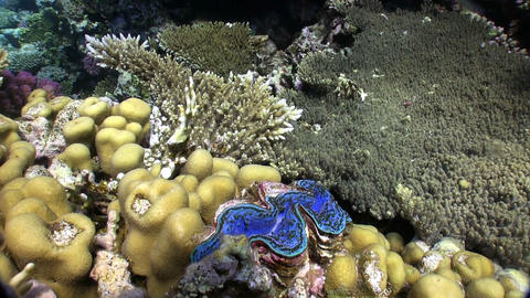 Colorful Sponge on Vibrant Coral Reef Stock Video Footage