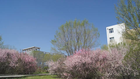 Heihe University spring campus garden Stock Video Footage
