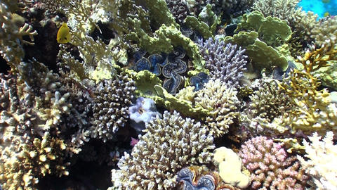 Colorful Sponge on Vibrant Coral Reef Footage