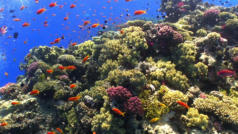 Colorful Fish on Vibrant Coral Reef Stock Video Footage